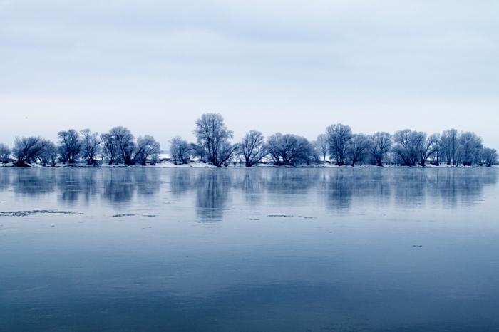 Zamraźniete drzewa na brzegu rzeki - Frozen trees on riverbank