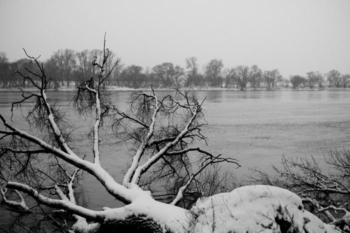 Tree covered in snow - Drzewo pokryte śniegiem