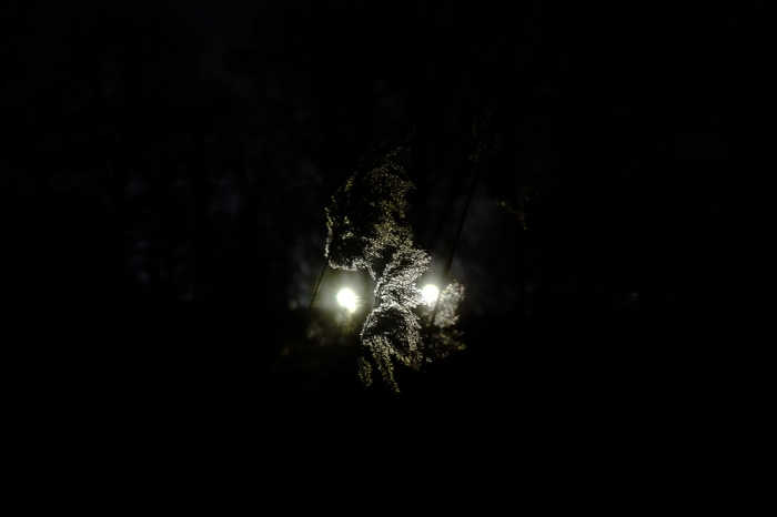 Face from light, shadow and cane - Twarz z światła, cienia i trzciny