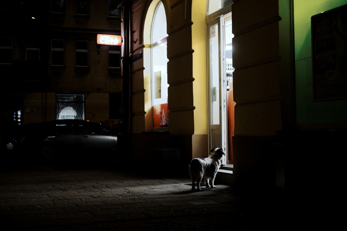 Dog waitng in the front of a shop - Pies czekający przed sklepem