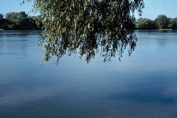 Branches, Vistula - Gałęzie, Wisła
