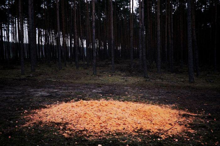 Carrot in woods - Marchewka w lesie